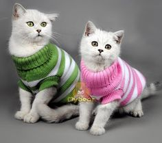 Candy Stripe Color Warm Winter Cat Sweater for cats img 01