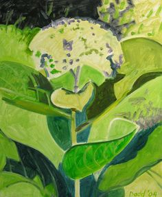 Caldbeck Gallery: White Hydrangea by Lois Dodd