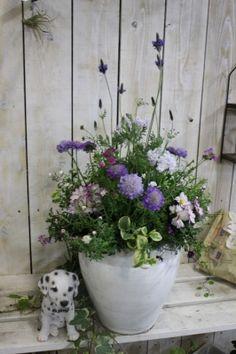 今日はグッデイ長尾店で素敵なスカビオサの花苗を見つけたので香のいいハーブのラベンダーと一緒に植えました♪写真の材料はすべてホームセンターグッデイ長尾店で入手できました♡