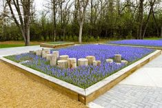 Natural Playground: artistic use of plantings. I think this is grape hyacinth which grows wild and is tough as nails. Children's Garden and Nature Playground at the Assiniboine Park