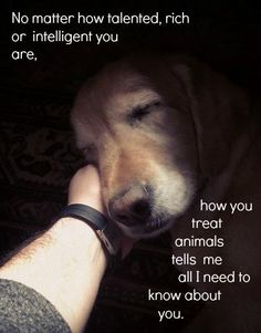 Be the slightest bit mean to an animal (ANY ANIMAL) and I'm gonna keep you at arms length.