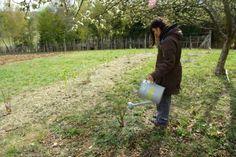 Foto-Anleitung zum Pflanzen von Beerensträuchern. 10 Fotos aus unserem Garten. :)