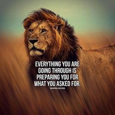 Positive Quotes Everything you are going through is part of Lion quotes - Positive Quotes QUOTATION Image As the quote says Description Everything you are going through Wisdom Quotes, True Quotes, Words Quotes, Motivational Quotes, Inspirational Quotes, Sayings, Citation Lion, Inspiration Entrepreneur, Lion Quotes