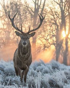 winter, deer, and forest image winter, deer, and forest image Nature Animals, Animals And Pets, Cute Animals, Wildlife Photography, Animal Photography, Amazing Photography, Beautiful Creatures, Animals Beautiful, Majestic Animals