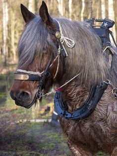Trekpaarden Draft Horse - Working for a Living