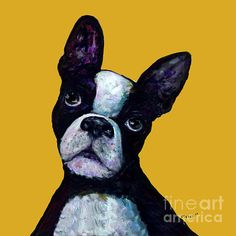 Perky Boston Terrier on a bright yellow background.  Looks great as a METAL PRINT for a super contemporary look that needs no framing.  Also available as greeting cards, gallery wrapped gallery prints and paper prints with your choice of framing and matting.