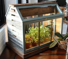 Not going to lie.. I want this little greenhouse