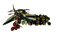 How do I Preserve Olives?  Fresh olives are too bitter to eat, but curing them makes for a delicious appetizer and makes the fruit last longer. You can preserve olives at home using either a brine or a dry salt method.