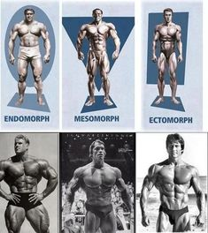 Body Types | SimplyShredded.com - Body Building Forum | Page 1 #bodybuildingnutrition