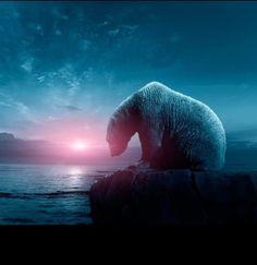 Polar Bear in Deep Thought