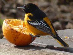On feeding wild birds...