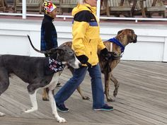 Boardwalkin' for Pets returns to Ocean City, MD this month, bringing dogs and their owners out to the Boardwalk to raise money for the WCHS.