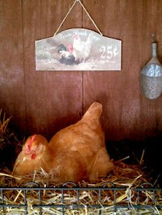 Great blog on raising chickens