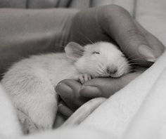 I love this, the little one is so relax and most importantly, so trusting...he knows he is loved.