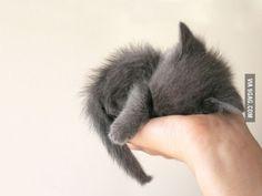 So tiny.