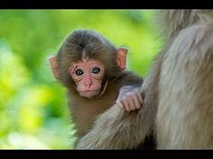Cute Baby Monkeys Playing & Relaxing Compilation - [New 2015] - YouTube