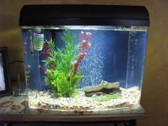 A 2 5 gallon tank with a beautiful betta this is a small for Fish tank full movie