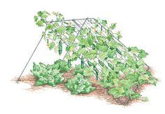 Cucumber Trellises- make out of pvc & bean netting  Plant lettuce underneath