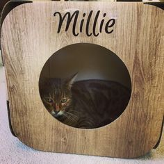 Millie has a beautiful face  but I don't think she likes the paparazzi  #cat #catsofinstagram #cats_of_instagram #catfurnature #catfurniture #catsinboxes #cattoy #INSTACAT_MEOWS #cutecat #PurrMachine #catsinboxes #catbox #Excellent_Cats #BestMeow #dailykittymail #thecatniptimes #catcube #catpod #ArchNemesis #FlyingArchNemesis #myindoorpaws #ififitsisits #cutecatcrew #catchalet #catnip #themeowdaily #kitty #catpyramid #pyramid