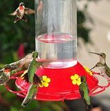 Hummingbird Nectar Boil the water before adding the sugar. 4:1 water to sugar ratio most closely approximates the sucrose levels in natural nectar. Cool completely before filling feeders.