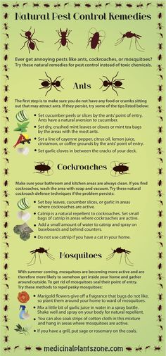 19 Best Bed Bug Info images in 2015 | Bed bugs, Bed bug bites, Insects
