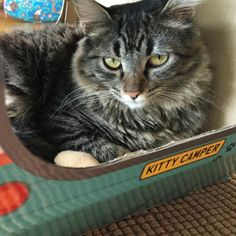 Cute cat enjoying his solitude in the Kitty Camper! The purrfect cat house and cat toy to keep them entertained for hours!