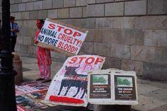 Barcelona Pictures, Stop Animal Cruelty, Animals, Art, Art Background, Animales, Animaux, Kunst, Animal