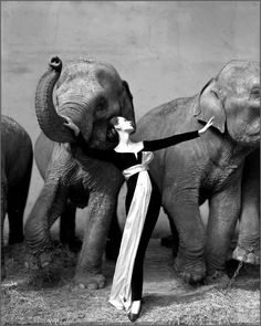 Richard Avedon, Dovima with Elephants, Cirque d'Hiver, Paris, 1955