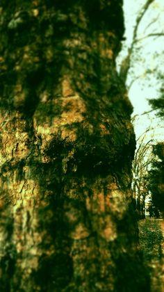 Smętarzowe drzewo