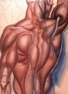 Dynamic Anatomy: Revised and Expanded Edition: Burne Hogarth: 9780823015528: Amazon.com: Books via PinCG.com