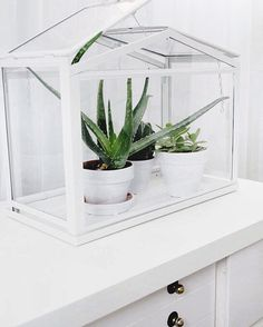 succulents, tumblr, cute, plants // pinterest and insta → siobhan_dolan