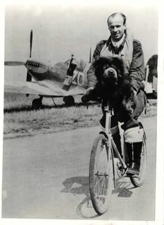 """1943- Czech pilot officer of R.A.F. Natal Squadron gives mascot dog """"Kuppee"""" a bicycle ride after bombing trip."""