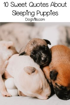 If you're looking for some sweet or funny sleeping puppy quotes, you'll love our list! These sayings capture everything we love about napping dogs! Dog Training Bells, Best Dog Training, Dog Breeds Little, Best Dog Breeds, Dog Quotes Funny, Funny Dogs, Big Dogs, Dogs And Puppies, Sleeping Puppies
