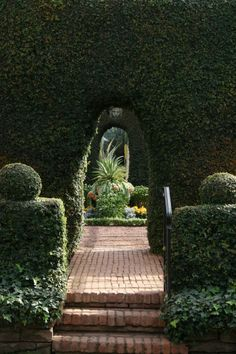 ivy + arches
