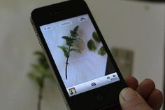 DIY: Identify Leaves and Flowers (There's an App for That) Gardenista