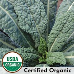 Heirloom Kale Seeds - Organic & Non-GMO Kale | Seed Savers Exchange