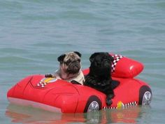 Floating :)