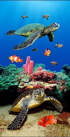 This might get your interest if you like betta fish. - - This might get your interest if you like betta fish. Sea Turtle Art, Baby Sea Turtles, Cute Turtles, Turtle Love, Sea Turtle Painting, Underwater Animals, Underwater Creatures, Ocean Creatures, Beautiful Sea Creatures