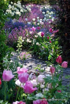 Pink, blue, white, flower garden..