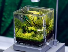 Nano tanks. Would love to set one up with a few black neon tetras or a plakat betta