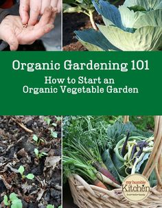 Organic Gardening 101 - How to Start an Organic Vegetable Garden | myhumblekitchen.com