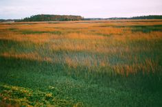 Autumn gold in the marshes near Tybee