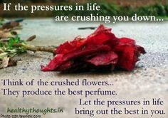 If the pressures in life are crushing you down-think of the crushed flowers that produce the best perfume-Let the pressures in life-bring out the best in you-motivational-quotes-thought for the day