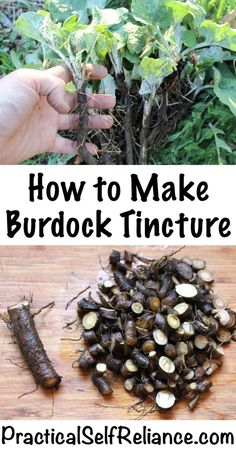 How to Make Burdock Tincture Health Clear Skin Health Remedies Health Tips Health For women Health Natural Health Tips Natural Health Remedies, Natural Cures, Natural Healing, Herbal Remedies, Natural Foods, Holistic Healing, Natural Oil, Cold Remedies, Natural Beauty
