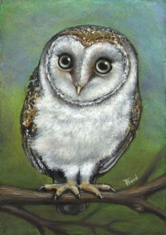 An owl friend ORIGNAL oil pastel painting art by by tanyabond