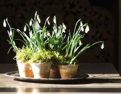 snowdrops My French Country Home, French Living - Sharon Santoni