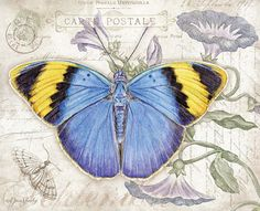 Lang - September   2015 Wallpaper | Butterflies
