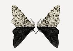 Peppered Moth Art Print by Rhian Davie | Society6