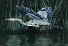 """Acrylic painting of a blue heron, by Terry Isaac - """"Marsh Glider"""", 11.5""""x17"""""""