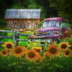 Take Us For A Ride In The Sunflower Patch Oil Painting Art Print by Debra and Dave Vanderlaan. All prints are professionally printed, packaged, and shipped within 3 - 4 business days. Choose from multiple sizes and hundreds of frame and mat options. Old Pickup Trucks, Ford Trucks, Lifted Trucks, Lifted Ford, Jeep Pickup, Ford 4x4, 4x4 Trucks, Diesel Trucks, Pickup Camper